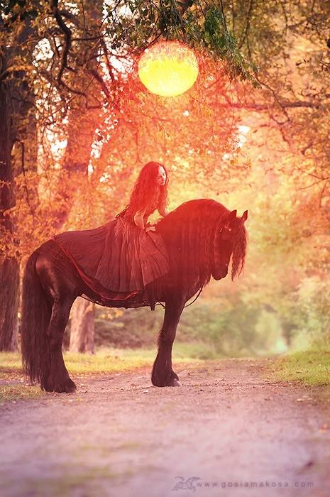 dressed up friesian